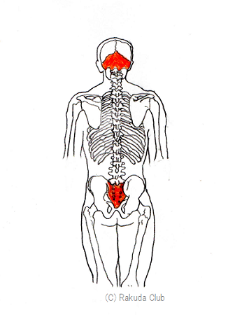北小金の整体骨盤矯正