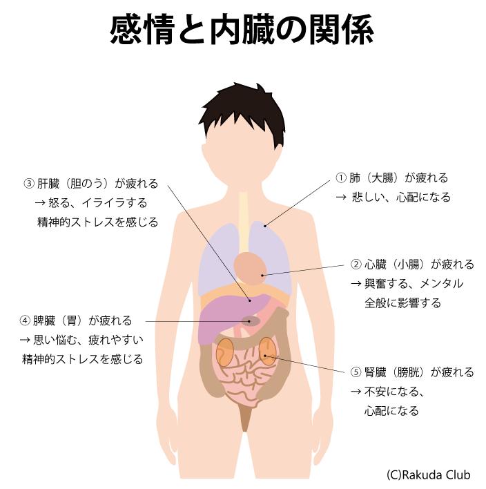 感情と内臓の関係